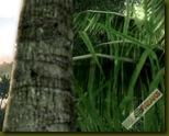 Crysis 2008-10-08 18-17-07-63